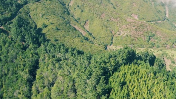 Thumbnail for Aerial View of the Mountain Evergreen Forest