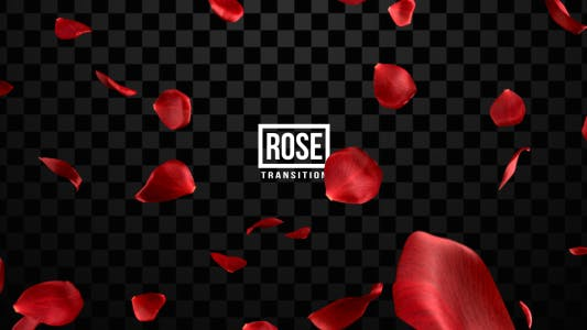 Thumbnail for Rose Transitions