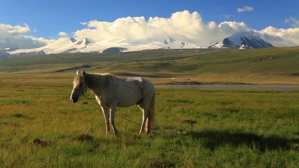 Thumbnail for White Horse on a Green Meadow in Mountains