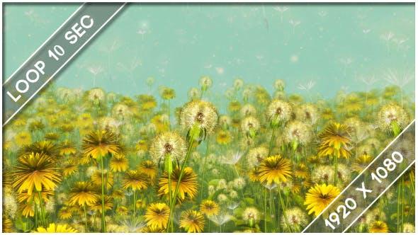 Thumbnail for Flowers Dandelions Meadow 1