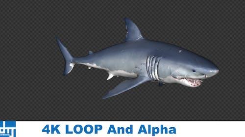Shark Attack v1