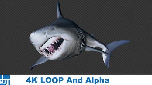 SHARK ATTACK V2