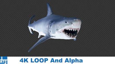 Shark AttackV4