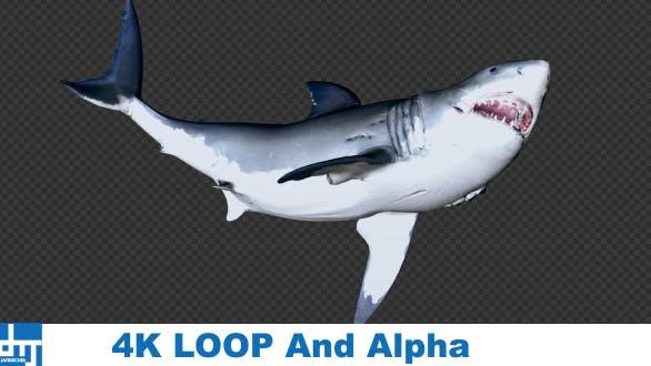 Thumbnail for Shark Attack V5