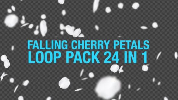 Falling Cherry Petals 24 in 1