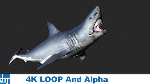 Shark Attack V7