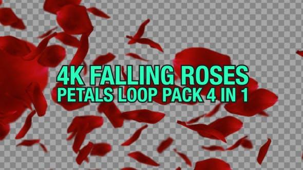 Thumbnail for 4K Rose Fallen Pack 4 n 1