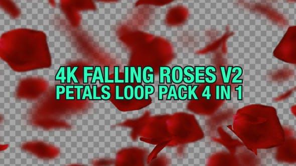 4K Rose Falling Pack V2 4 n 1