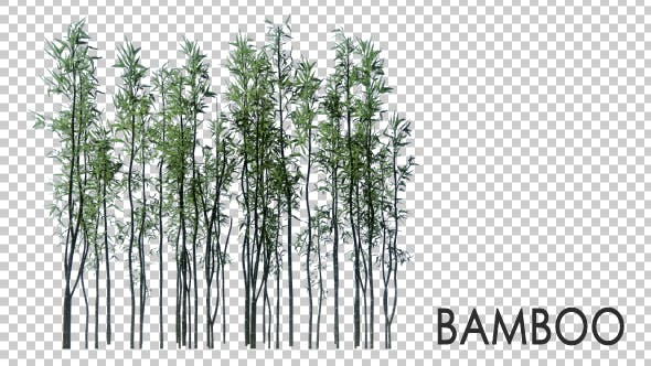 Thumbnail for 3D Bamboo Trees