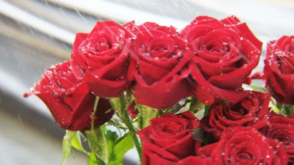 Thumbnail for Red Roses Rotating in the Rain