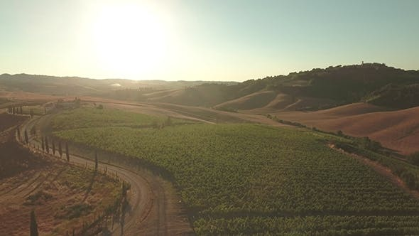 Thumbnail for Drone Footage of Vineyard By Dirt Road in Tuscany