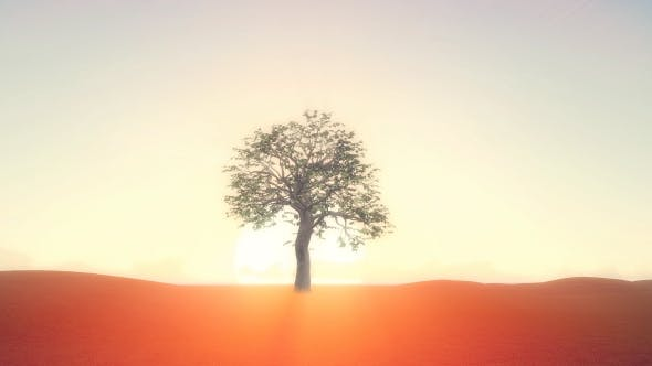 Thumbnail for Realistic Growing Tree At Sunrise