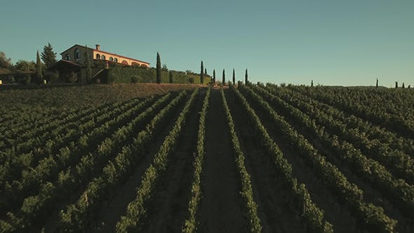Cover Image for Aerial Drone Footage of Grape Fields in Tuscany