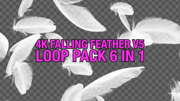 Thumbnail for 4K Falling Feather Pack V5 6 in 1