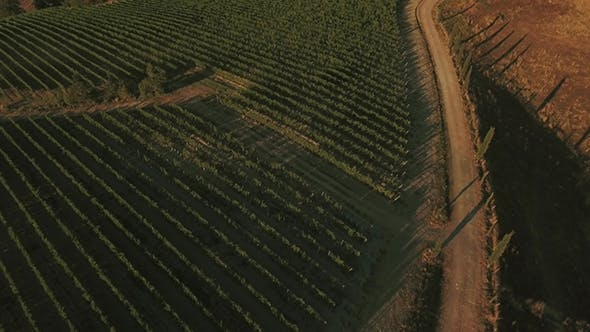 Thumbnail for Drone Footage of Vineyards in Tuscany Region