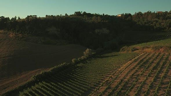 Aerial Shot of Vineyards in Tuscany