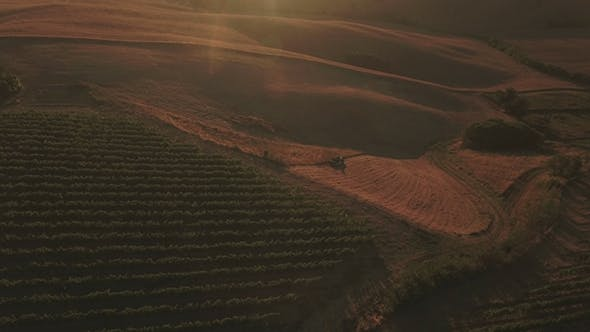 Vineyards and Tractor Harvesting Field