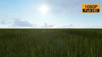 Field ad Sky