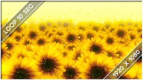 Blumen Sonnenblume Show 3