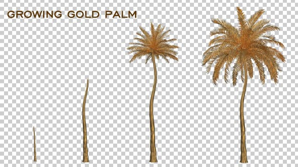 Thumbnail for Growing Gold Palm