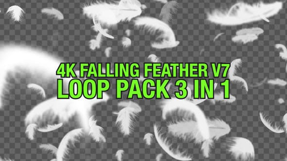 4K Falling Feather Pack V7 3 in 1