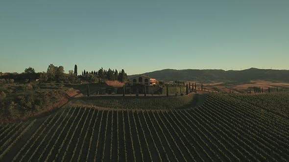 Thumbnail for Aerial Drone Footage of Vineyards and Countryside