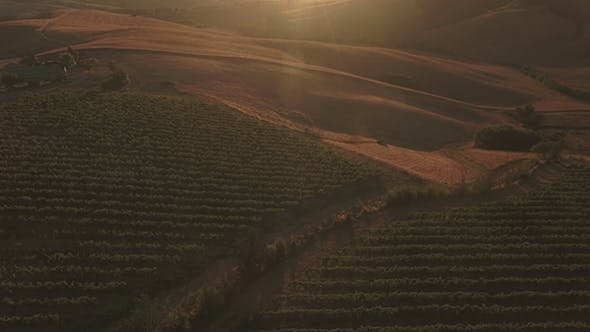 Aerial Shot of Vineyards on Sunny Day