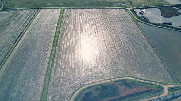 Thumbnail for Aerial Flight Above Rice Fields