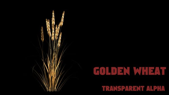 Thumbnail for Gold Wheat
