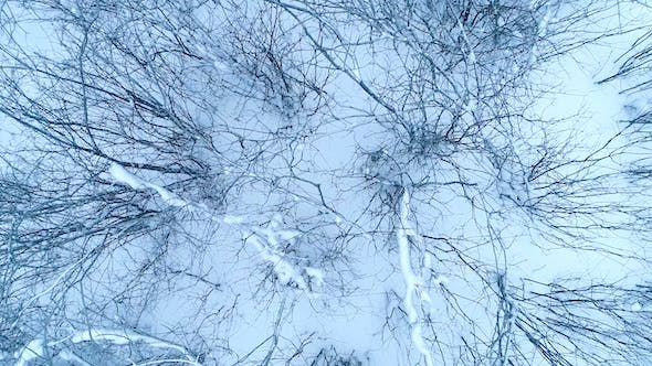 Thumbnail for Tangle of Branches On The Snow 1