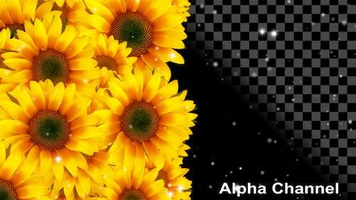 Blumen Sonnenblumen