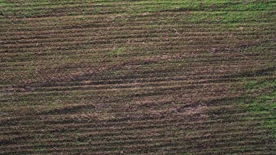 Flying Over the Green Field. Early Germination of Seed