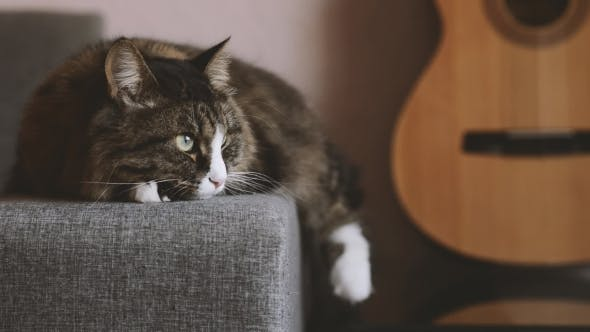 Thumbnail for Cat Resting on the Sofa Near a Guitar