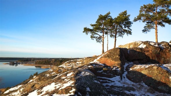 Thumbnail for Scandinavian Landscape. Several Lonely Pines on Rock Over the Baltic Sea