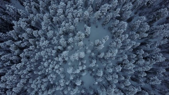 Cover Image for Aerial Top Down Moving Above Cold Snowy Winter Forest of Evergreen Trees