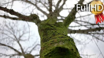 a Shallow Depth of Field Focused on the Moss on a