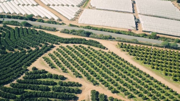 Thumbnail for Aerial View Fruit and Orange Trees Plantation