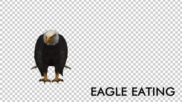 Thumbnail for Eagle Eating