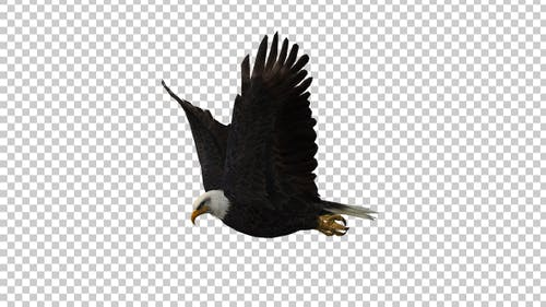 Eagle Flies and Turns Around