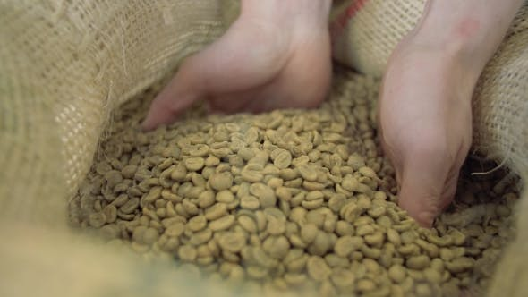 Thumbnail for Green Coffee Bags Take Hands