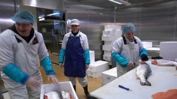 Thumbnail for Working Team in a Seafood Processing Factory