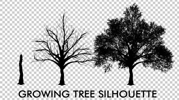 Thumbnail for Growing Tree Silhouette