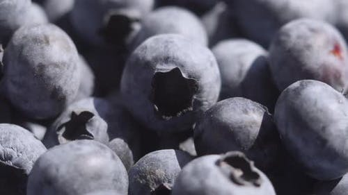 Close Up Blueberry Rotating Background. Lot of Ripe Blueberries Close Up. Organic and Healthy Food.