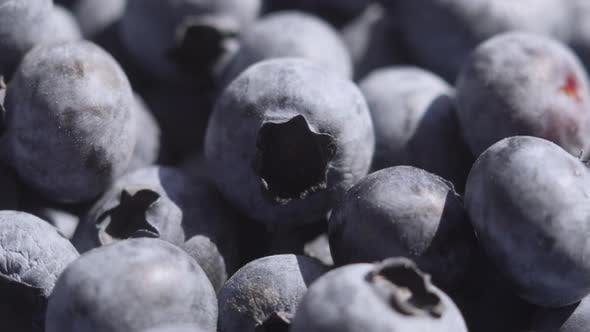 Thumbnail for Close Up Blueberry Rotating Background. Lot of Ripe Blueberries Close Up. Organic and Healthy Food.