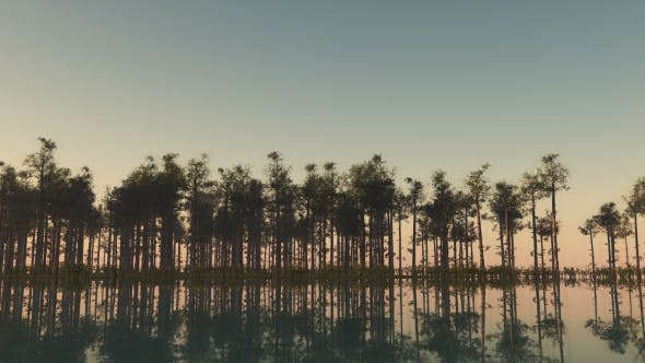 Thumbnail for Sun Shining Through the Trees