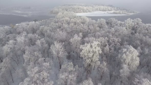 Thumbnail for Forest in Snow, Top View,