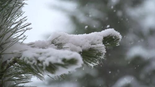 Snow snowing on a tree in the winter.