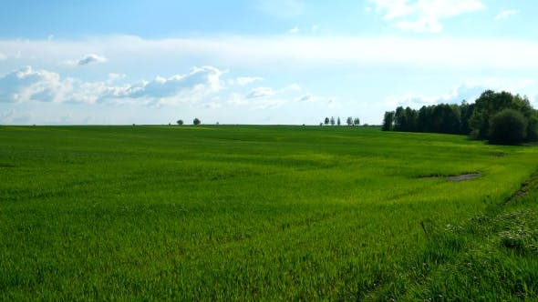 Thumbnail for Countryside Natural Background. Field with Wheat Germ. Cloudscape in Spring Sunny Day. Russia.