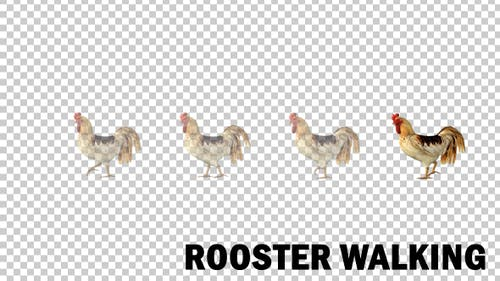 Farm Animals - Rooster Walk