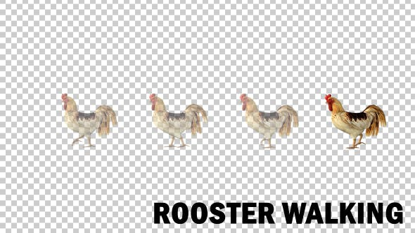 Cover Image for Farm Animals - Rooster Walk